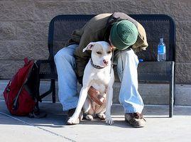 la Ley de Discapacidad de América y perros de servicio