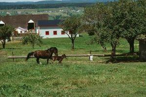 Los tratamientos para la fotosensibilización de las extremidades inferiores en los caballos