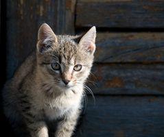 Gato con moco sanguinolento
