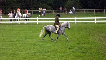 ¿Cómo aprender todo sobre los caballos