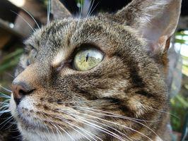 Tipos de gato UTI