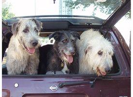 Remedios para el mareo para perros