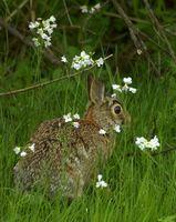 Cómo alimentar a los conejos de rabo blanco del bebé