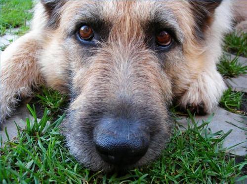 La pérdida de pelo en los perros