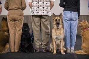 ¿Cuáles son los perros guía de servicio?