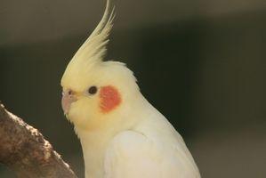 ¿Cómo deshacerse de los ácaros de las plumas