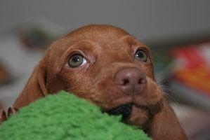 ¿Cómo deshacerse de los puntos calientes en los perros