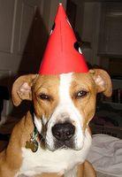 Cómo hacer que las resoluciones de Año Nuevo para Mascotas