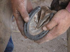 Cuáles son los tratamientos para la enfermedad de hueso navicular en caballos?