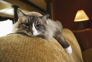 Cómo reparar arañazos de gato en vinilo Muebles
