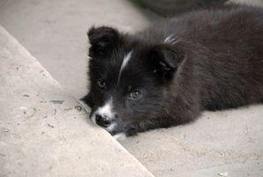 Pasos para hacer una casa de perro