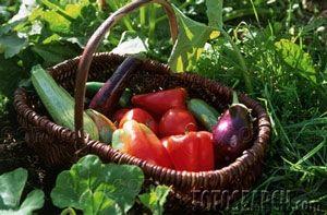 Cómo hacer Beau Monde salsa de verduras
