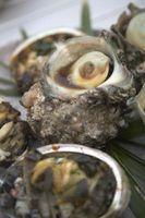 Las diferencias entre las almejas y las ostras