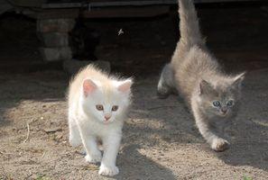 Son compatibles una hembra y un macho gatito?