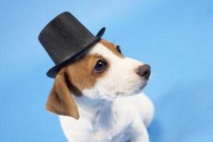 Cómo hacer un sombrero de Goofy