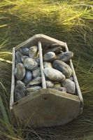 Cómo transportar almejas frescas en un refrigerador