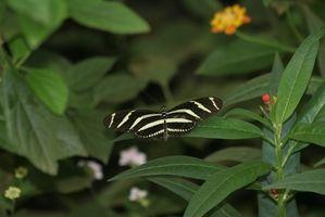 Las plantas comunes Selva Tropical