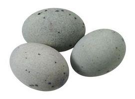 Cómo Hatch un huevo de pato Pekin