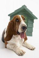 ¿Qué se puede poner en las patas de un perro para evitar que se lamiéndolas?