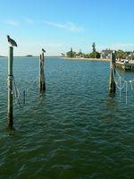 Cruceros de descuento de Tampa, Florida