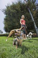 Cómo tomar mejor cuidado de un perro con un disco roto
