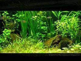 Cómo configurar un acuario plantado