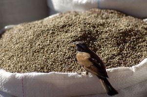 Los productos químicos en semillas de aves