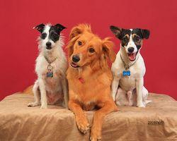 Los antibióticos Pet Store para las infecciones del oído del perro