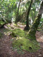 Los alimentos de la selva tropical de Australia