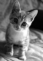 Cuáles son los tratamientos para un gatito con un resfriado?