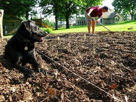 El mantillo de cedro y perros