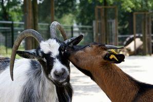 El jabón de leche de cabra buenas cosas hace para la piel