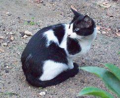 Acerca de Cat Scratch Fever