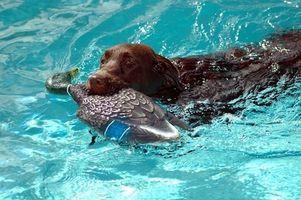 Con piscina Química y perros