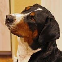 Los nemátodos y la pérdida del pelo en los perros