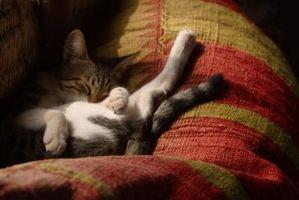 ¿Por qué los gatos duermen mucho?