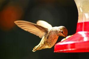 Cuando es el momento de acabar con Hummingbird Feeders?