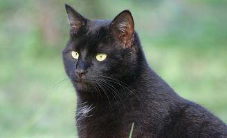 La diseminación del gato y la piel seca