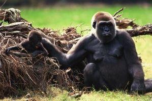 El sistema esquelético del mono