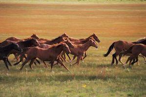 Cuál es la función del cartílago en un caballo?