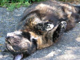 Baño natural de la pulga de los gatos