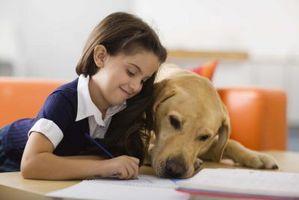 Formas Perros ayudar a los discapacitados