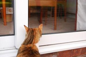 Cómo entrenar a un gato al aire libre para ser un gato de interior
