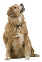 Remedios caseros para el pis del perro manchas en alfombras