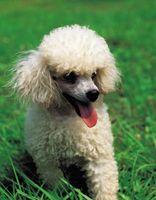 Los perros que se recomiendan para los niños con eczema