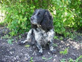 Formas alternativas para pulgas y garrapatas en perros Prevención