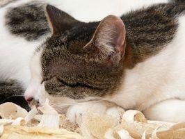 El pronóstico para el linfoma en los gatos