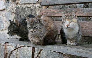 Efectos secundarios de primera línea en los gatos