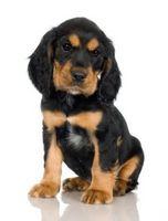 Maneras de mantener su Rottweiler Entertained