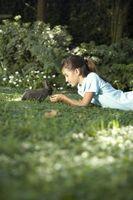 Cómo hacer que su conejo de Love You
